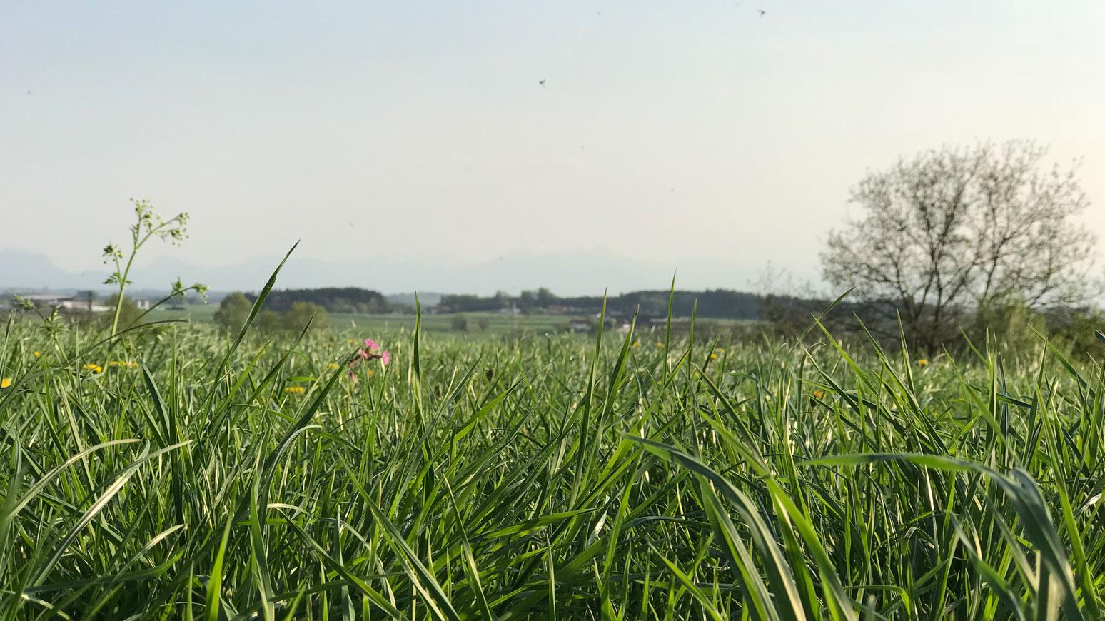 Aussichtsturm Wasserburg