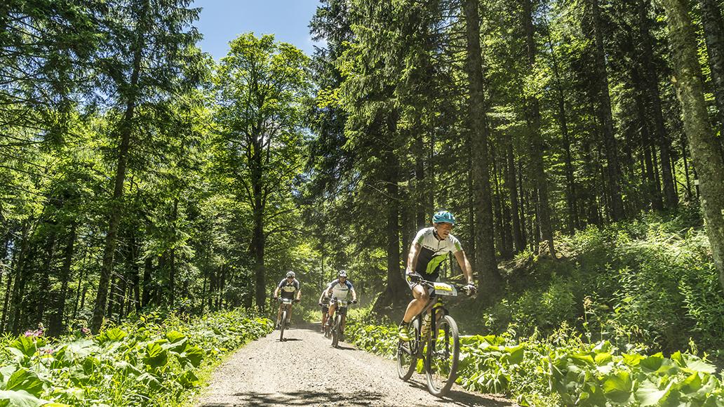 Anspruchsvolles Terrain: Der Schwarzwald ist für Mountainbiker nicht ohne!