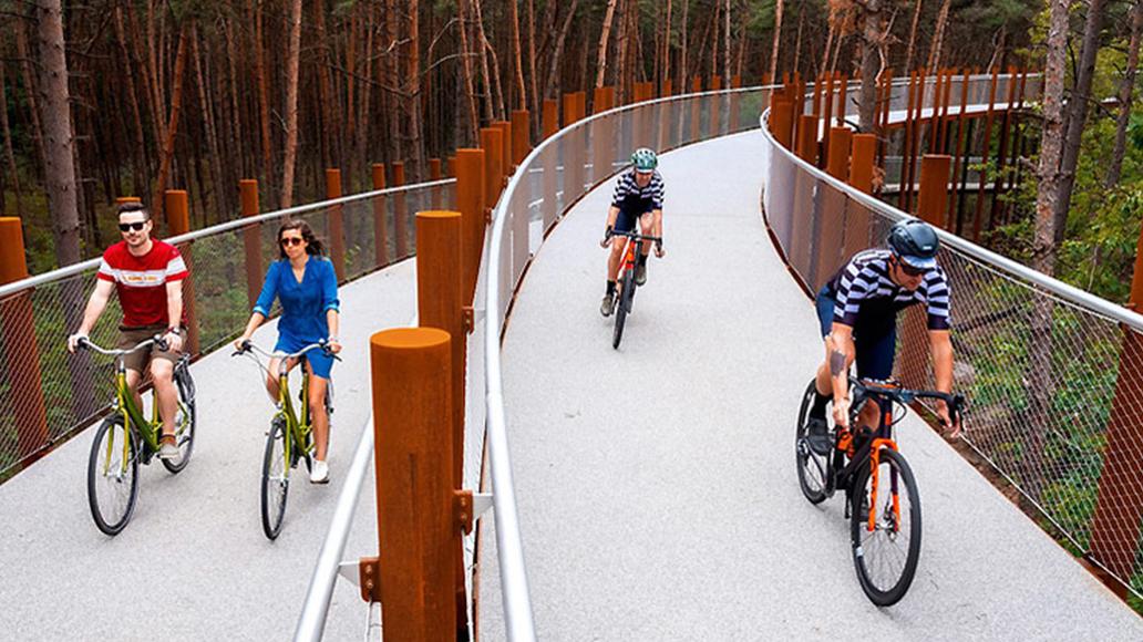 Cycling Through the Trees, Radfahren, Niederlande, Fahrrad